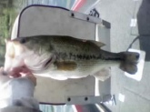 i dont know what this guy weighed i caught him at blue marsh lake in  burnsville  PA