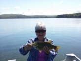 Fished the Quabbin Reservoir New Salem,Ma. Fish weighed 2 1/4lbs. I will be 71 in July. Been fishing forever. Love it.