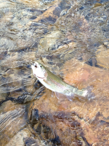 Trout in TN photo